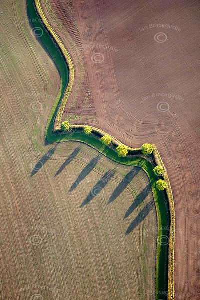 An aerial photo of trees pattern.