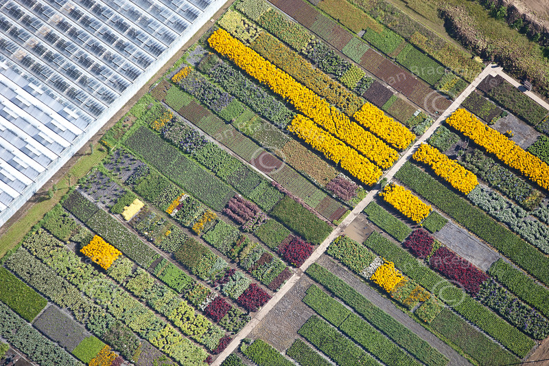 An aerial photo of a very colourful plant nursery near Spalding in Lincolnshire.