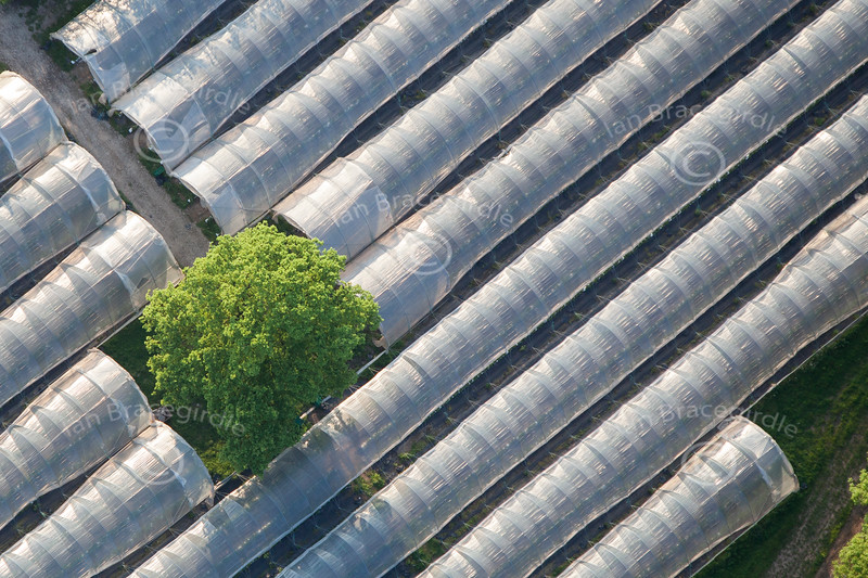 An aerial photo of a tree sticking out of a greenhouse.