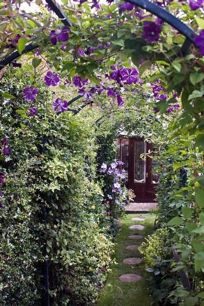 Clematis Ashva at Coley Cottage, Little Haywood open gardens