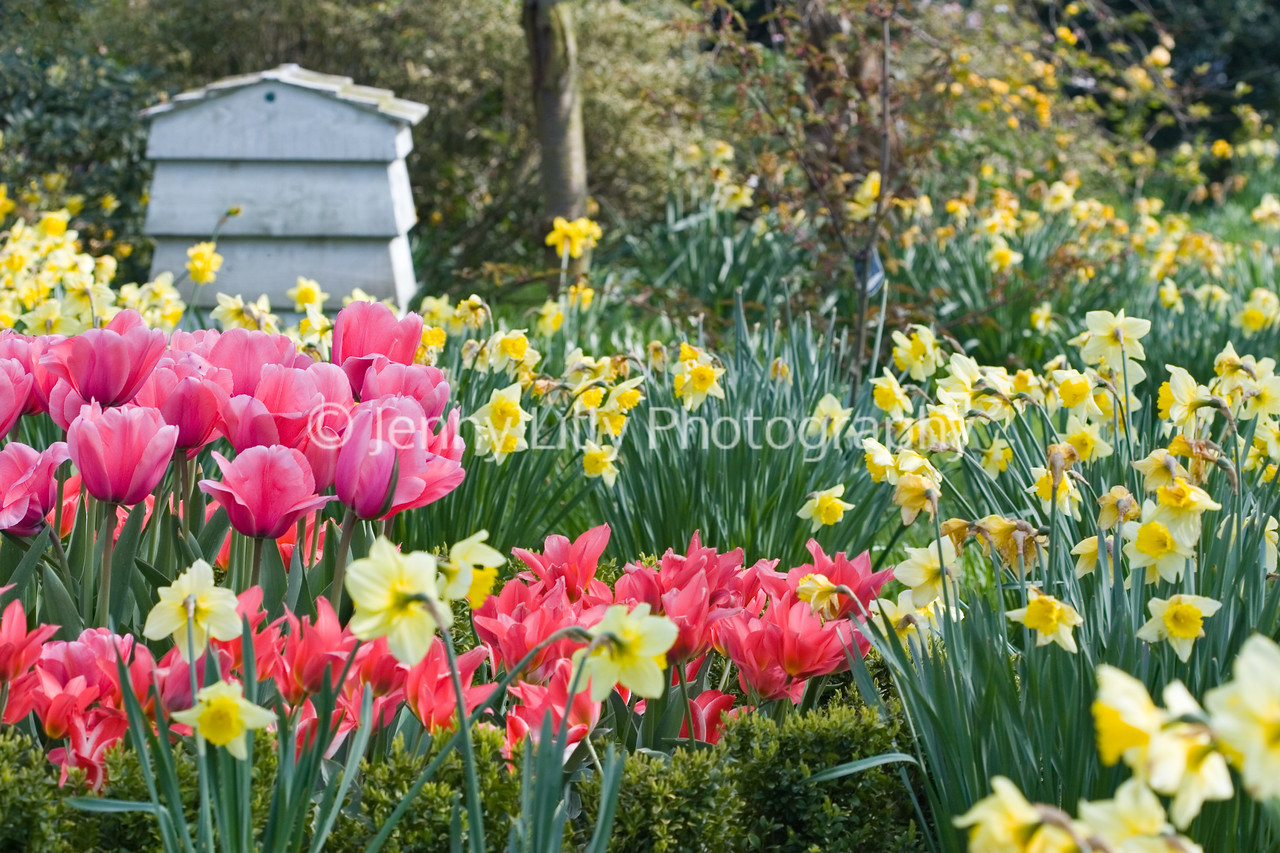 BEEHIVE COMPOSTER IN MEADOW OF NARCISSUS AND TULIPS