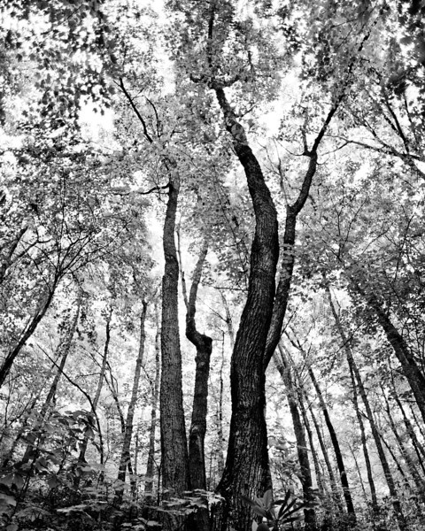looking up, trees