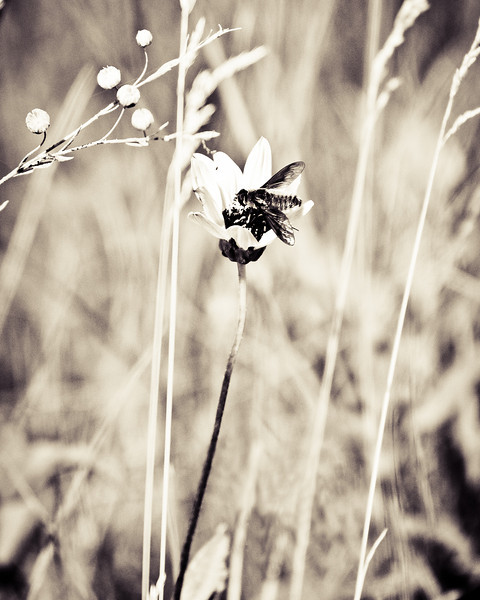 Prairie Flower, bug