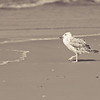 Beach, tern, bird, water, waves