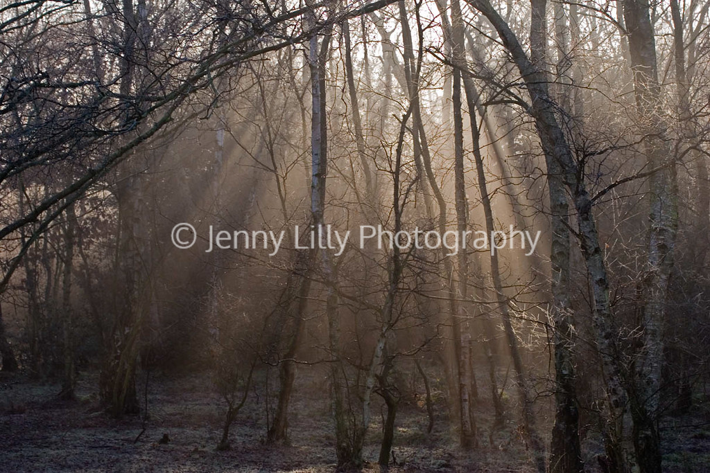VIEW THROUGH TREES IN THE EARLY MORNING MIST, SUTTON PARK