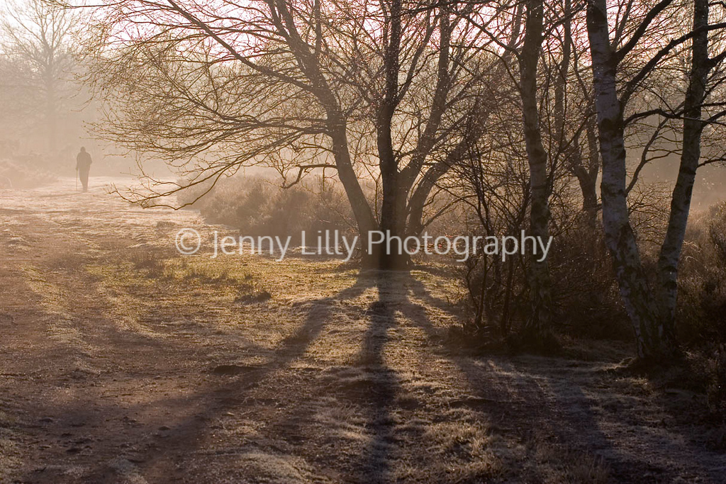 VIEW OF SUTTON PARK, IN THE EARLY MORNING MIST