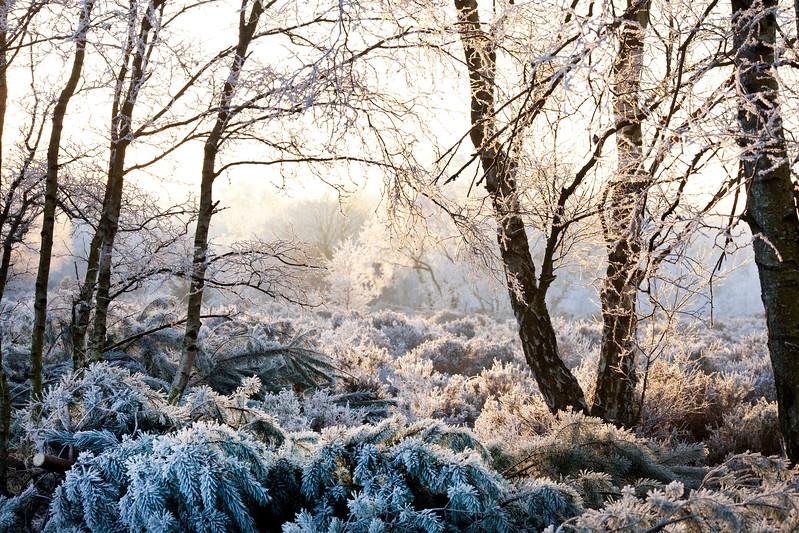 Sutton Park, Sutton Coldfield,  in frost