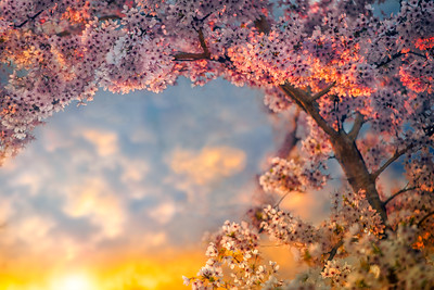 April Blossom | What Makes Your Soul Blossom Natural Sensuality Inner Poet
