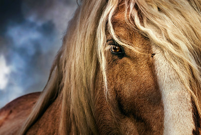 Zeus and the ancient wisdom of horses