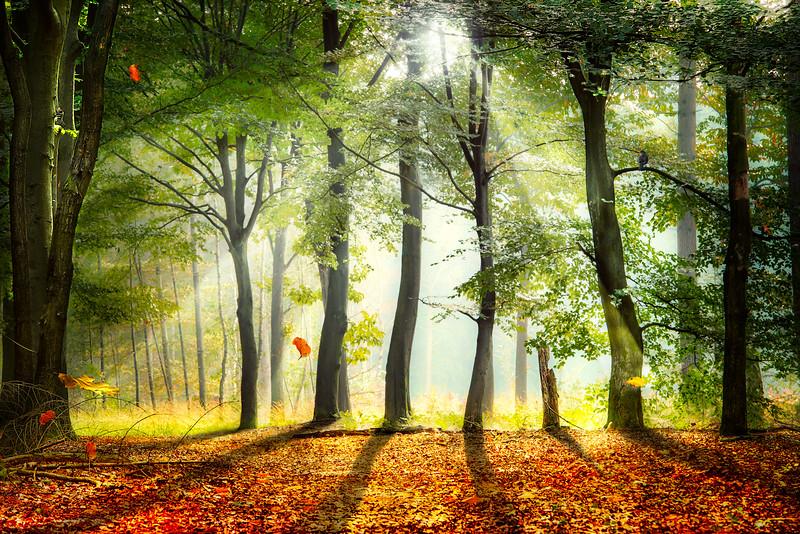 Sneak Peek   End of Summer Beginning of Autumn Bird Overgang Zomer naar Herfst Vallende Bladeren Falling Leaves Beukenboom Bos Zon Maashorst Bernheze