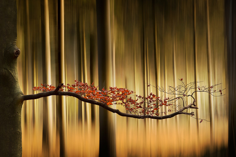 Living Art   Autumn Forest Branch with Colorful Leaves