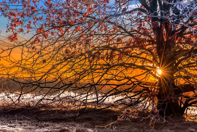 In Winter's Light