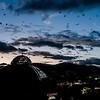 Fruit Bats Nightly Departure (Cairns, Australia - Nov 2016)