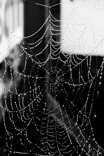 Germany - Regensburg - Dew Web.jpg