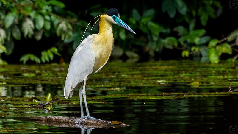 Peru - Rainforest-5.jpg