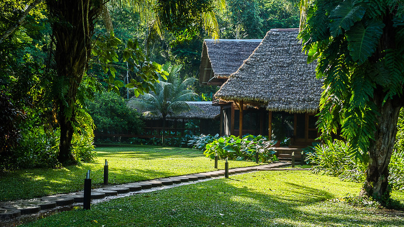 Peru - Rainforest-3.jpg