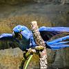 Wildlife - Macaw.jpg