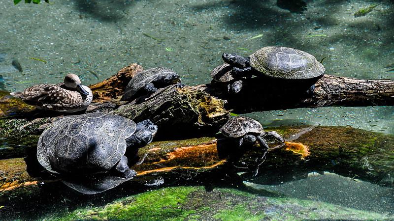Wildlife - Turtles.jpg