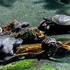 Wildlife - Turtles.jpg