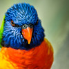 Wildlife - Macaw 2.jpg