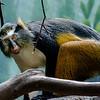 Wildlife - Wolfs Mona Monkey.jpg