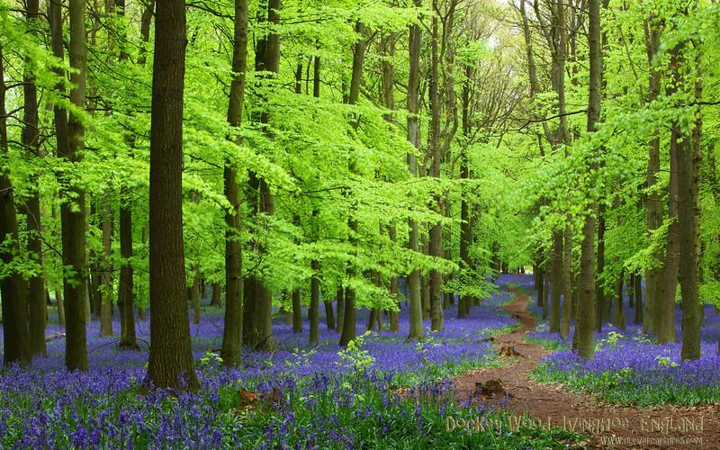 Dockey Wood 1440 x 900