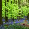 Dockey Wood 1600 x 900