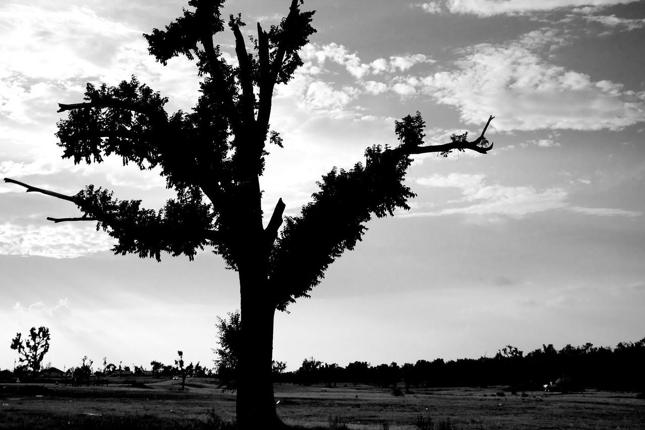 Tree in Joplin MO. after Tornado 2011-07-29