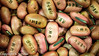 Jack Bean Seeds