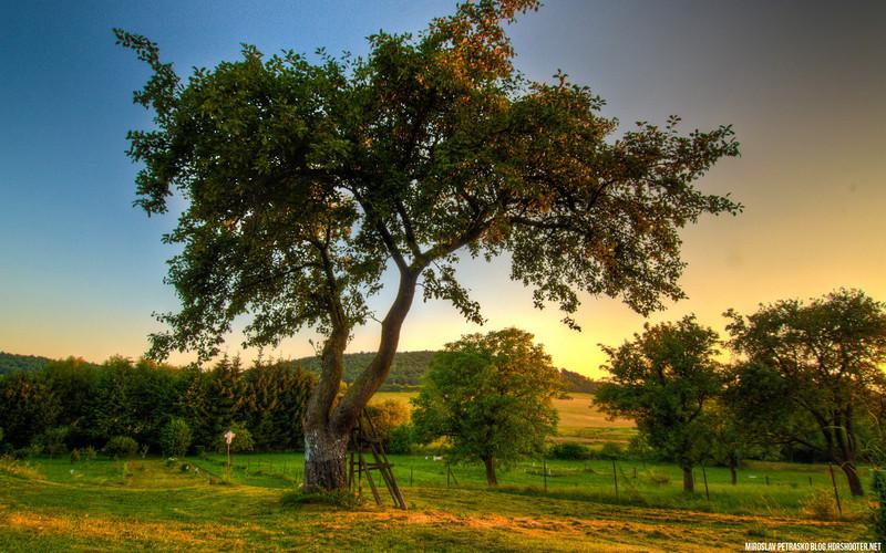 Sunset Tree 1920x1200