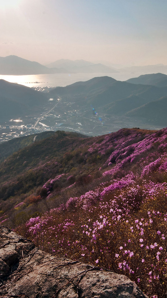 Yeongchuisan covered with azalea, Yeosu, Korea