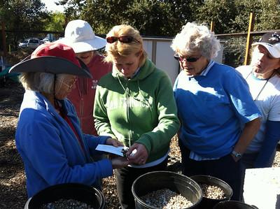 Harvesting Ceonothus Cuttings