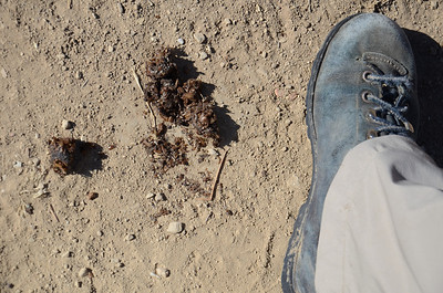 Seed Gathering, Lime Ridge South 073012