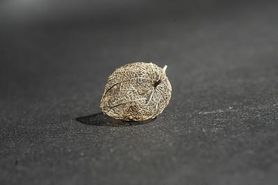 Seed Pod Basket