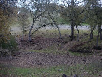 Shell Ridge Pond Survey - Christmas Day
