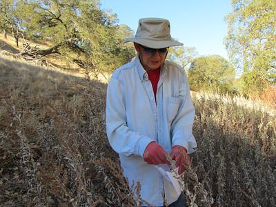 Sutherland's Seasonal Seeds