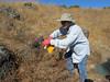 Karen captures some epilobium seed at Sutherland.