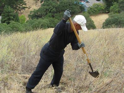 Tuesday Group Attacks Yellow Starthistle at Acalanes Ridge