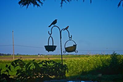 Birds House and Garden