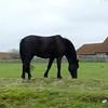 Horse outside the abbey