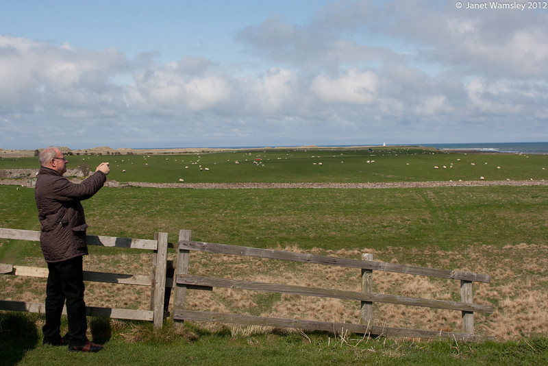 Fr. Andrew photographs the sheep