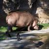 The Grand Gathering Safari MouseOwner's Spring Fling meet at Disney's Animal Kingdom.