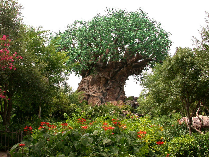 The Tree of LIfe at Disney's Animal Kingdom Park in Walt Disney World.