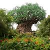 The Tree of LIfe at Disney's Animal Kingdom Park in Walt Disney World.