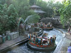 Disney's Animal Kingdom Park.