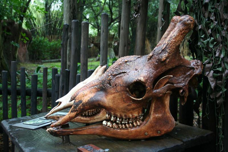 Pangani Forest Exploration Trail - Giraffe and Okapi Skulls
