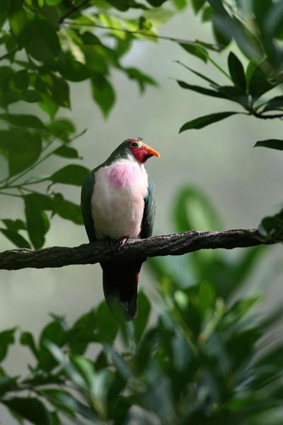 Maharajah Jungle Trek - Unknown Bird