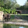 Kilimanjaro Safaris - African Elephant