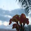 Flower in Future World