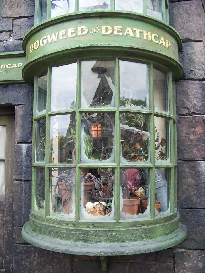 Another storefront you couldn't actually enter was for Dogweed and Deathcap, which sells magical botanical supplies.  This facade was on the building which housed the restrooms in Hogsmeade.  When you went inside the restrooms, you could hear the ghost Moaning Myrtle crying and talking--a little disturbing to hear a girl's voice resonating in the men's room!  :-)<br /> [Universal Islands of Adventure - Wizarding World of Harry Potter]